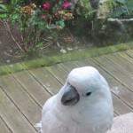 Quinta das Murtas - Lustiger Papagai