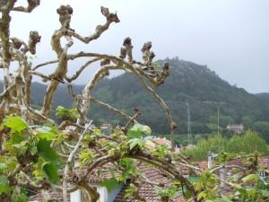 Ausblick von der Pension Nova Sintra