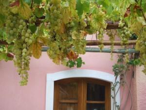 Haus und Wein