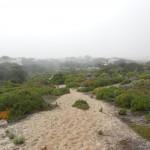 Ebene südlich Nazaré: Düne